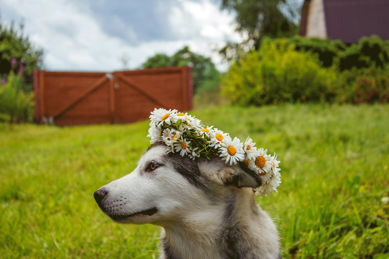 Pet_Safe_Flowers_and_Plants